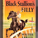 Stallion filly  book in dj thumb128