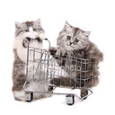 Stock photo 4315447 cat shopping thumb128