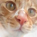 simplecrystal's profile picture