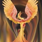 Phoenix thumb175
