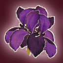 Logo   purple thumb128