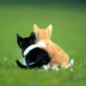 Hugging kittens thumb175