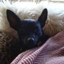 bonzbuyer_yblde's profile picture