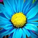 Blue_flower_thumb128