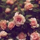 Floral flowers vintage favim.com 330468 thumb128