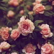 Floral flowers vintage favim.com 330468 thumb175