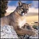 laurimac1's profile picture
