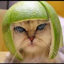 lensterju's profile picture
