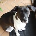 jomodaisy's profile picture