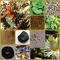 Collage_thumb48
