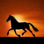 Sunsethorse thumb175