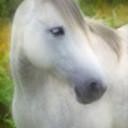 Horse thumb128