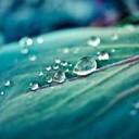 waterlily12's avatar