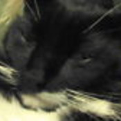 blueyedkat's profile picture