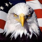 American_symbols_screensaver-139594_thumb175