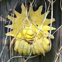 Sunny thumb128