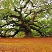 Tree3 thumb175
