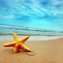 Ocean beach sand starfish  305 24 thumb128