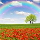 Rainbow3 thumb128