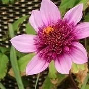 purplepatty124's profile picture
