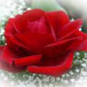 A-Rose-Designs's profile picture