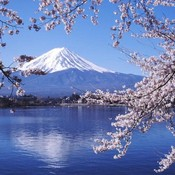 lavender-japan's profile picture