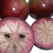 Star apple thumb175