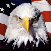 Eagle americanflag wallpaper.jpg thumb175