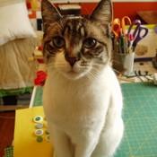 Smiling_Cat's profile picture