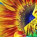 Sunflowercartoon thumb128