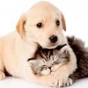 Perros o gatos  78868cbcda81d35ac488554829b8dc56 thumb128