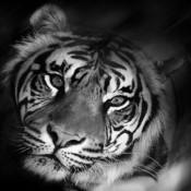 Whitelab55's profile picture