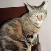 czroberts's profile picture