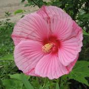 Flower_906_thumb175