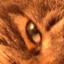 a2v_Vintage's profile picture