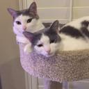 Kitties thumb128