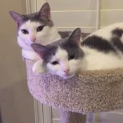 Kitties thumb175
