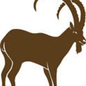 anatolianibex's profile picture