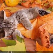 Autumn kitty thumb175