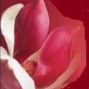 vlmat1's profile picture