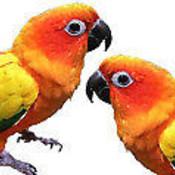 Parrotbooks's profile picture