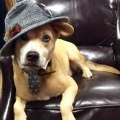 Topdog thumb175