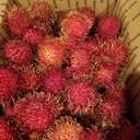 freshfloridafruit's profile picture