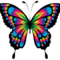 vbutterfly's profile picture