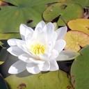 ib30667's profile picture