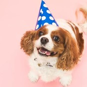 Dog in birthday hat thumb175