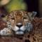 Catgirl2's profile picture