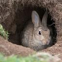 BunnysBurrow's profile picture
