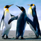 Penguins thumb48