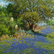 A blue texan spring giclee thumb175